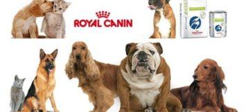 nourriture-royal-canin
