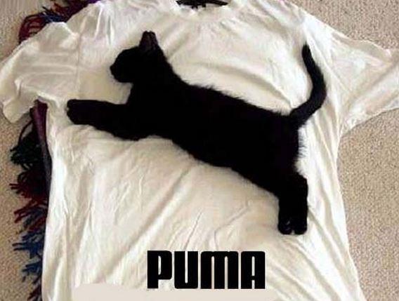 gagnez un panier de nourriture et des jeux pour chats chiens quebec echantillons gratuits. Black Bedroom Furniture Sets. Home Design Ideas