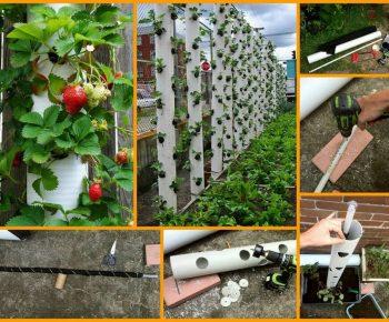 Cr ez une jardini re en pvc verticale quebec echantillons gratuits - Comment cueillir des fraises ...