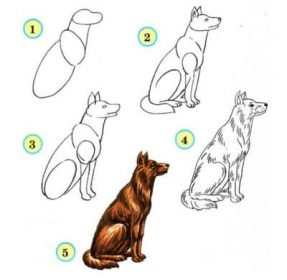 Bekannt Dessiner des animaux : Voici les astuces et les étapes à suivre WU48