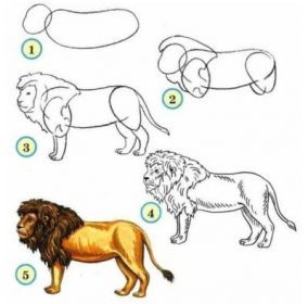 dessiner des animaux - dessiner un lion