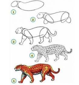 dessiner une panthère - dessiner des animaux