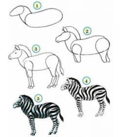 dessiner des animaux - Dessiner un Zèbre