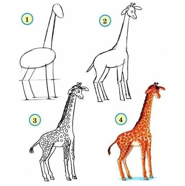 Comment dessiner les animaux du zoo quebec echantillons gratuits - Comment dessiner des animaux ...