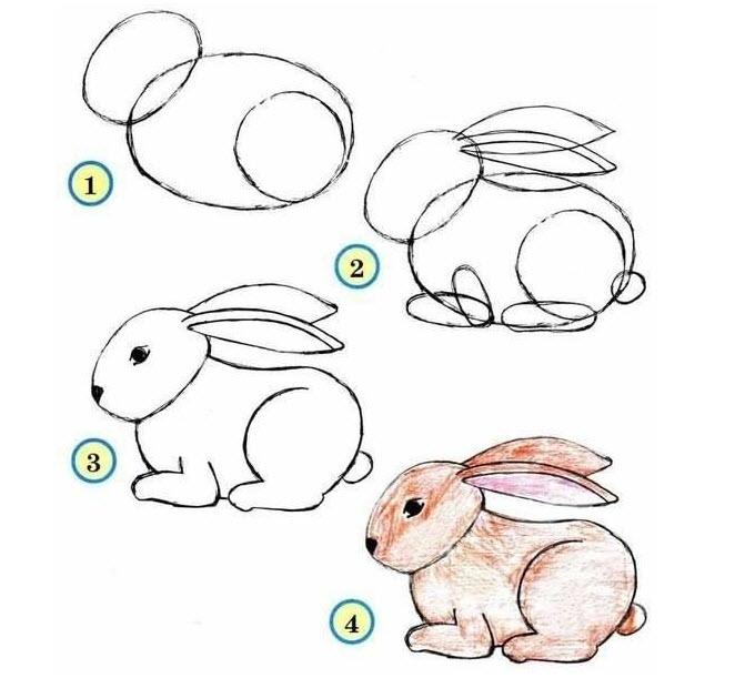 Comment dessiner les animaux du zoo quebec echantillons gratuits - Dessiner des animaux facilement ...