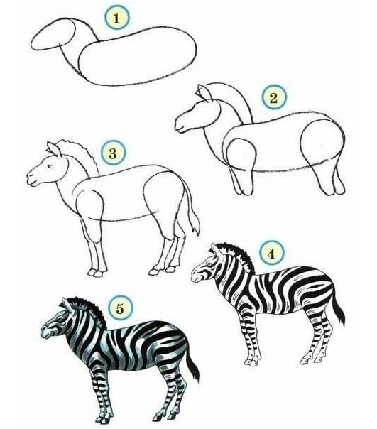 Comment dessiner les animaux du zoo • Quebec echantillons ...