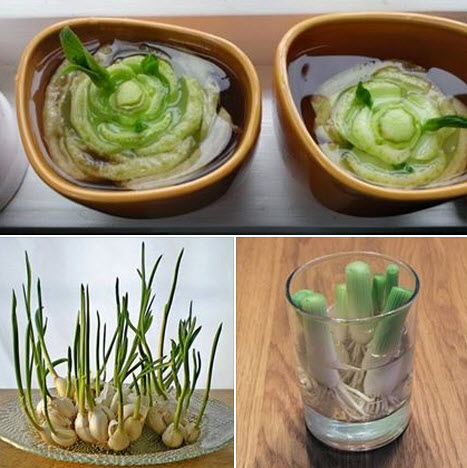 recultiver-legumes