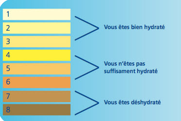 Ce que r v le la couleur de votre urine quebec for La couleur jaune signification