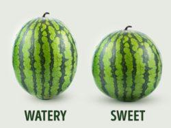 choisir melon d'eau 3