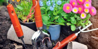 Quelques idees de jardinage a faire pendant le confinement